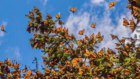Een zwerm vlinders in een boom