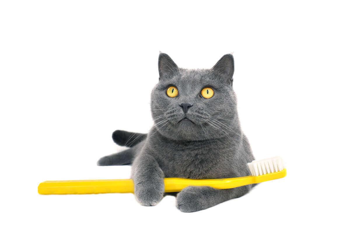Kat houdt een tandenborstel vast