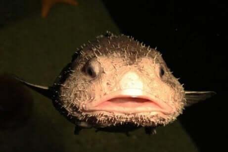 De voorkant van de kop van een blobvis