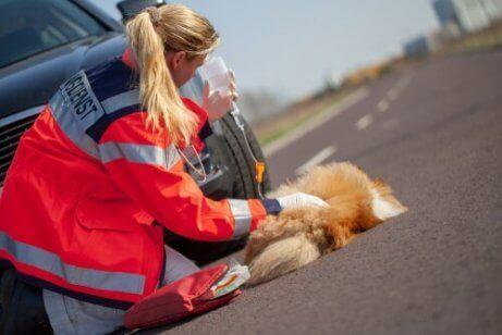 Een aangereden hond ligt naast een auto