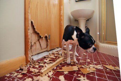 Een hond naast een kapotte houten deur