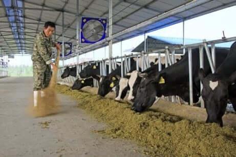 Een boer maakt schoon in de stal van een landbowbedrijf