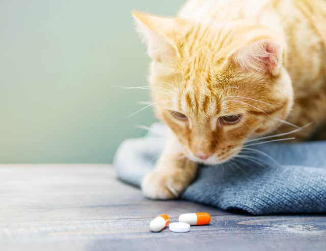Kat bekijkt pillen