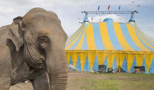 Een olifant voor een circustent