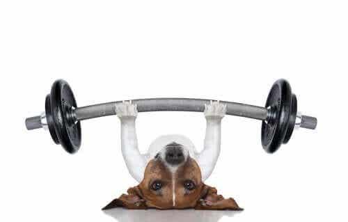Een bewerkte afbeelding van een hond die een gewicht heft
