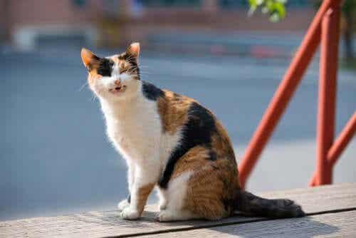 Een kat zit buiten in de zon en miauwt