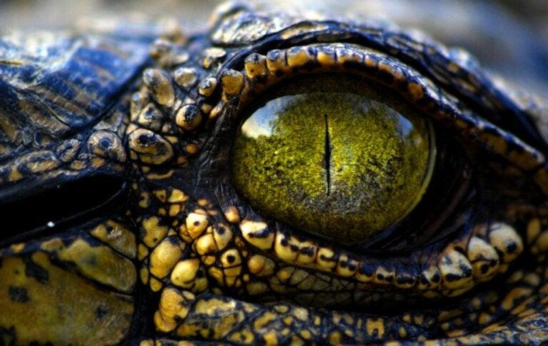 9 soorten krokodillen