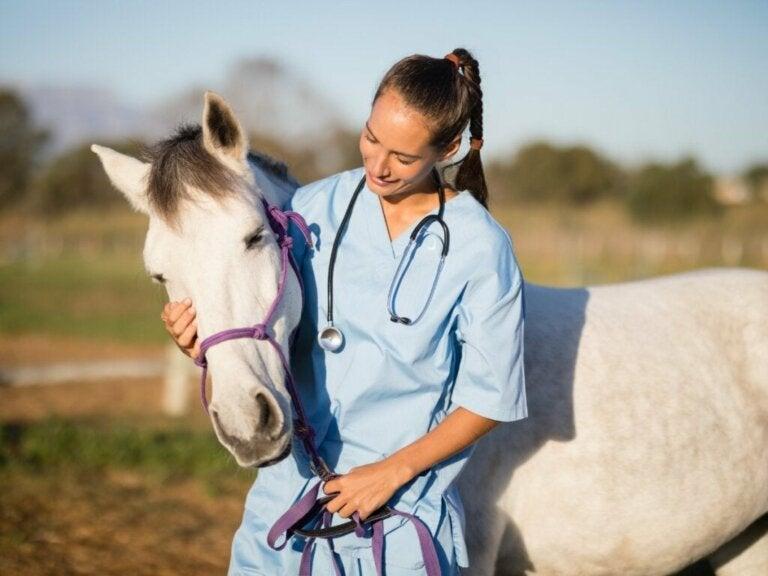 Wat is paardeninfluenza eigenlijk?