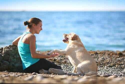 Een hond geeft zijn baasje een poot op het strand