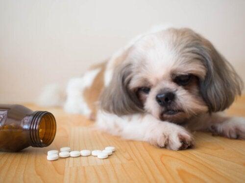 Procox voor honden: gebruik en bijwerkingen