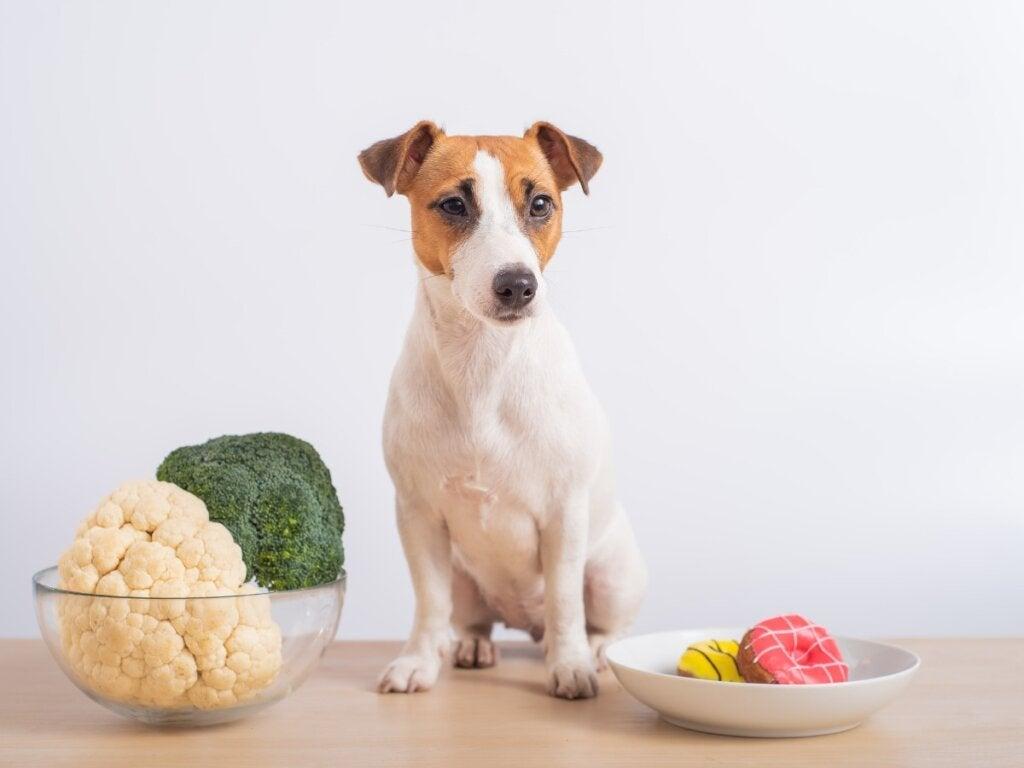 Mogen honden bloemkool eten?