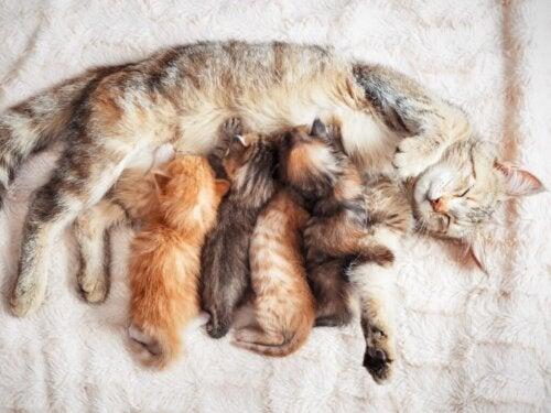 Borsttumoren bij katten: oorzaken, symptomen en behandeling