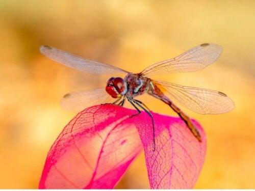 Libellen - slachtoffers van de opwarming van de aarde