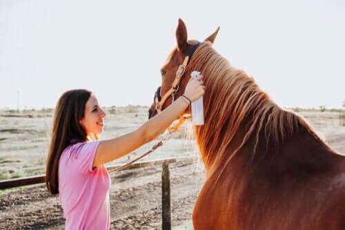 De behandeling van ringworm bij paarden