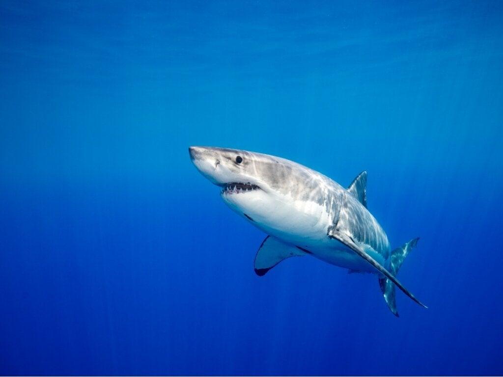 Wist je dat haaien langdurige relaties hebben?