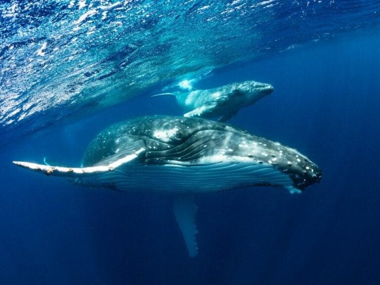 De 10 grootste zeedieren ter wereld