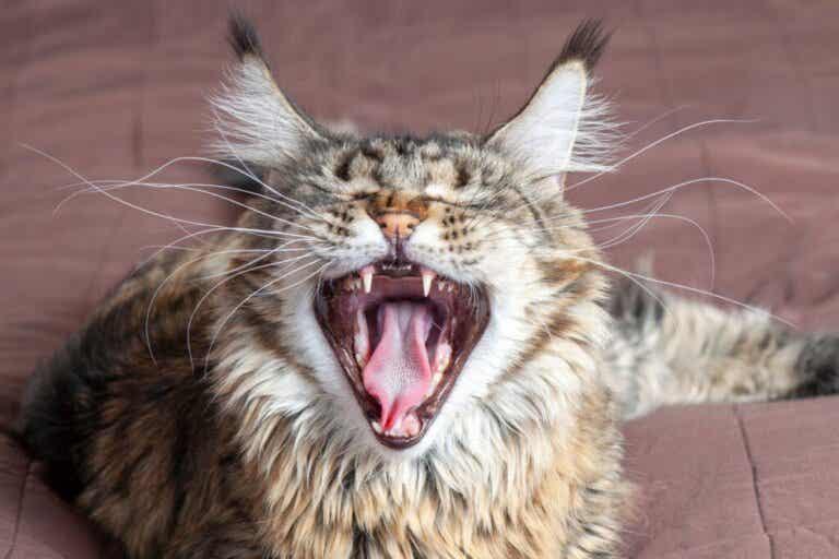 4 mythes over de snorharen van katten