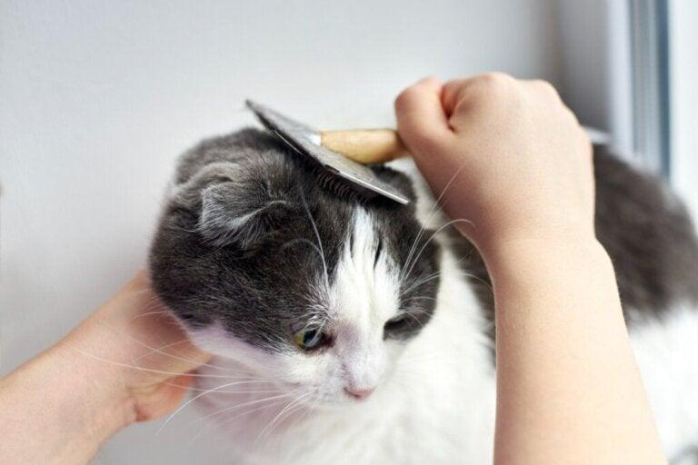 Haaruitval bij katten: hoe kan ik het voorkomen?