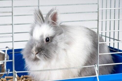 Waarom bijt mijn konijn in zijn kooi?