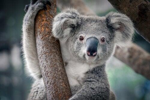 De 12 dieren die het meest getroffen worden door klimaatverandering