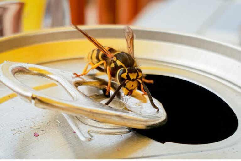 Wat eten wespen eigenlijk precies?