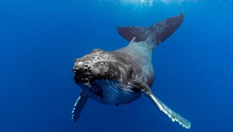 Leer meer over het gedrag van walvissen