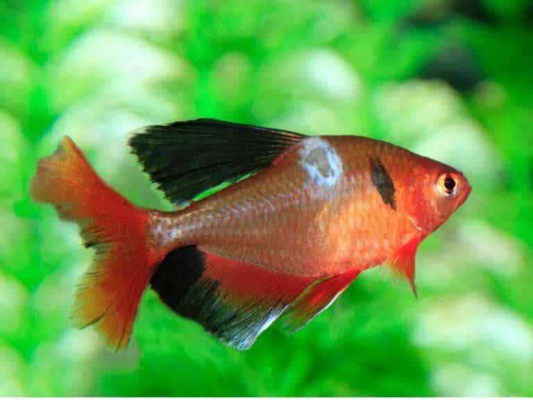 Schimmels bij vissen: soorten, symptomen en behandelingen