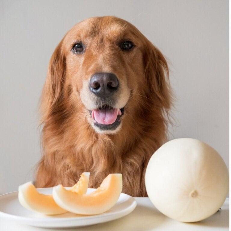 Mogen honden meloen eten?