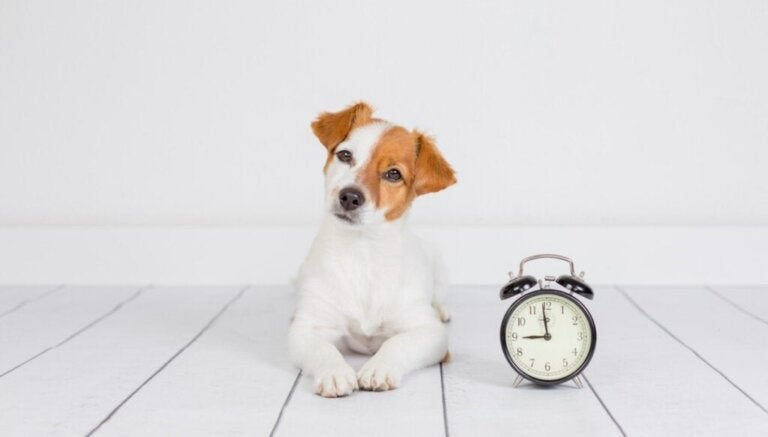 8 vaardigheden die een puppy moet leren in zijn eerste jaar