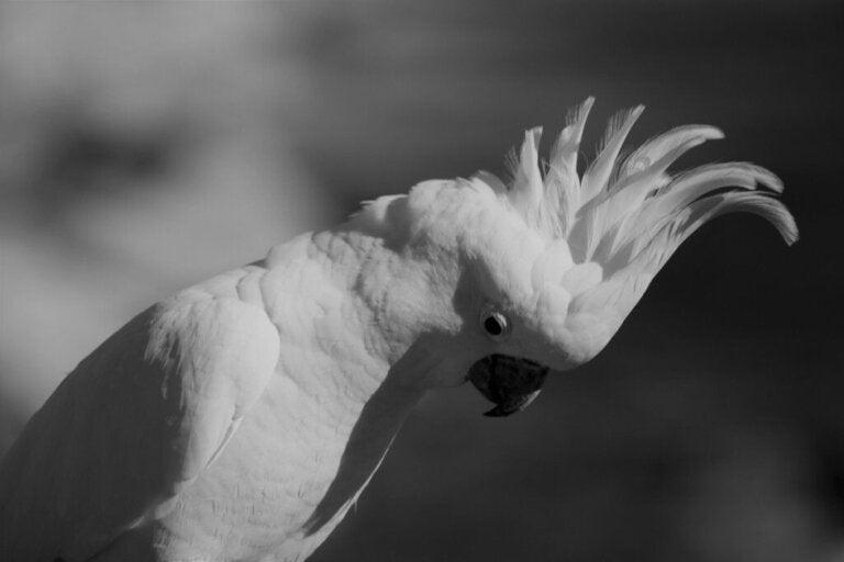 Stress bij tamme vogels: oorzaken, symptomen en oplossingen