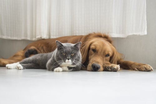 Pies i kot a posiadanie zwierząt domowych