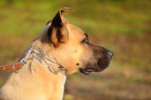 Uratowali psa przywiązany do łańcucha