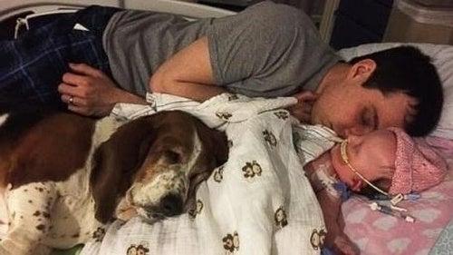 Basset hound wiernie pilnujący swojego właściciela