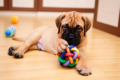 Twoje zwierzątko - jak o nie dbać, gdy nie ma cię w pobliżu?