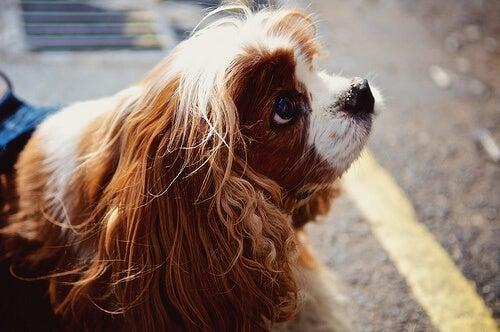 Mówienie do psa-jak sprawia, że stajesz się mądrzejszy