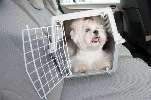 Piesek w podróży w klatce