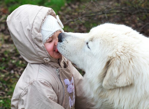 Pies liżący dziecko.