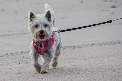 Spacery z psem - jakie błędy wtedy popełniamy?
