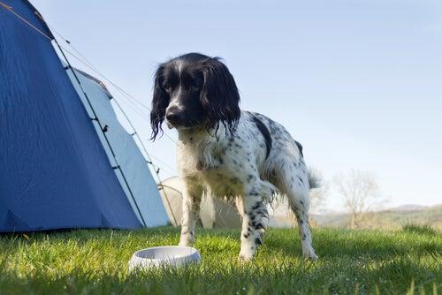 Pies stoi nad miską na trawie