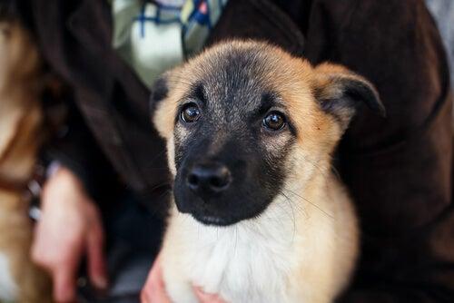 Strach przed grzmotami - jak pomóc naszemu psu?