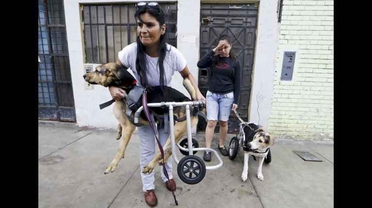 Schronisko dla niepełnosprawnych psów, kobieta niesie niepełnosprawnego psa