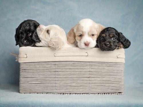 Imię dla psa – jak dobrać imię dla twojego pupila