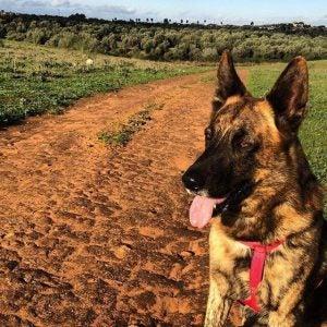 strata zwierzaka - jak sobie poradzić