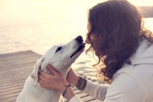 całowanie psa