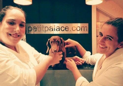 Luksusowy hotel dla zwierząt petit palace dwie kobiety z psem