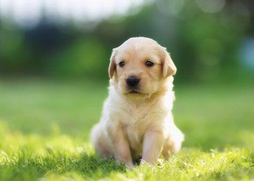 Imiona dla psów - 14 najbardziej twórczych