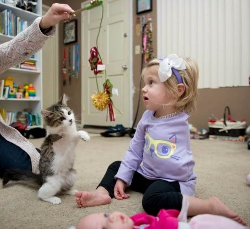 Kotek z 3 łapkami -adoptowany przez dziewczynkę bez rączki