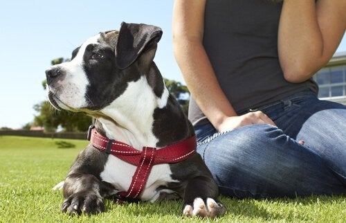 Posiadanie psa poprawia zdrowie emocjonalne i fizyczne
