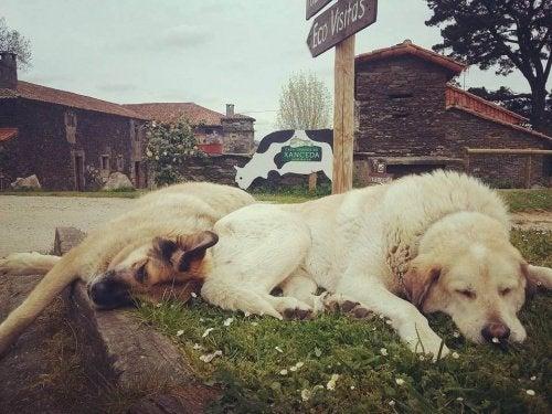 Kampania adopcyjna dla psów firmy mleczarskiej