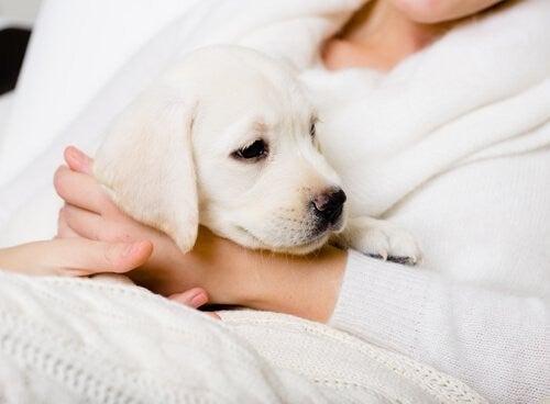 Pies jako najlepszy towarzysz dla starszych ludzi szczeniaczek na rękach